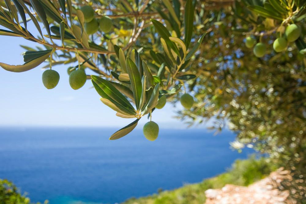 Olive Verdi Scelta Oro Doypack - Origine
