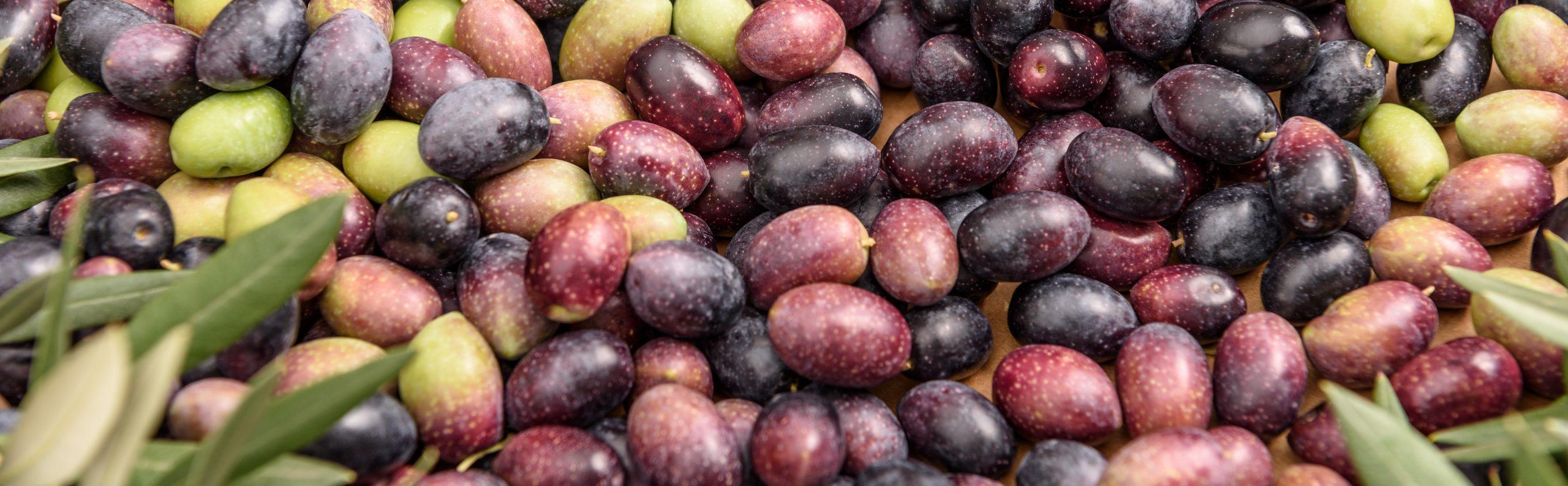 olive sama